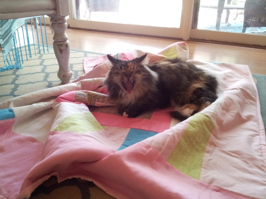 Pets on Quilts 3
