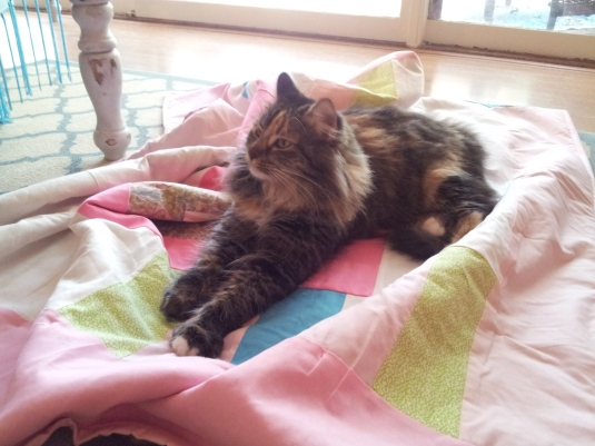 Pets on Quilts 4