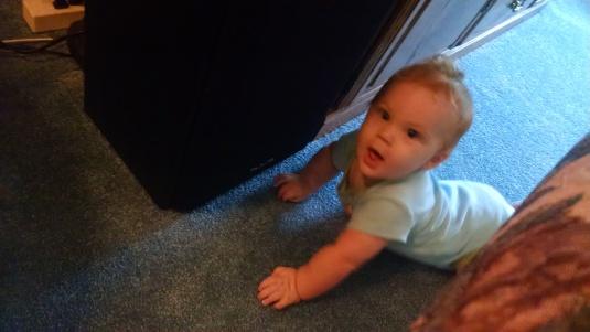 Jackson, 7 months old